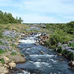 Natuur Reykjavik - Ellidaardalur