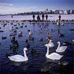 Natuur Reykjavik - Tjornin